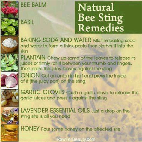 bee sting remedies diy