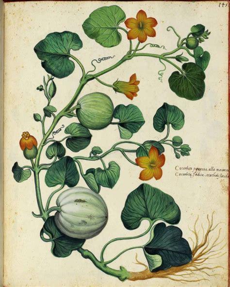 Poster Set Of 2 Tropical Leaves Cactus 2xa4 botanical squash vine italian 3 vintage printable