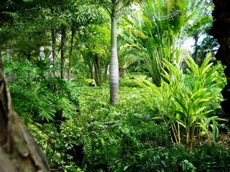 tropical shade plants google search