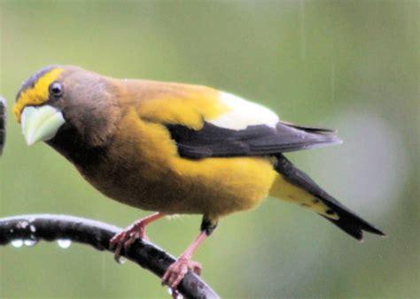more backyard birds at the birds