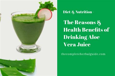 Would You Drink This Aloe Juice by Carrot Juice Benefits Dosage And Side Effects