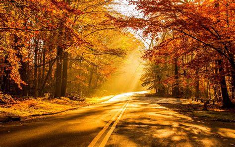 wallpaper fall foliage autumn hd  nature