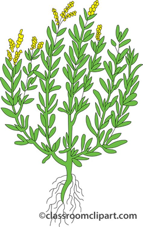 kids herbal clipart clipground