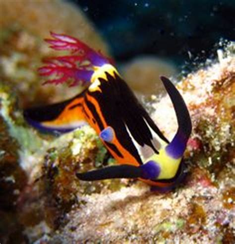Unique Lights 5159 by Mandarinfish Also Called The Mandarin Goby Or Mandarin