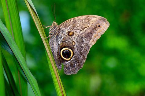 farfalla fiore immagini natura erba ala foglia fiore animale