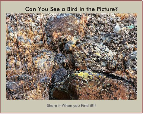 fun picture riddle find the bird hidden in the photo