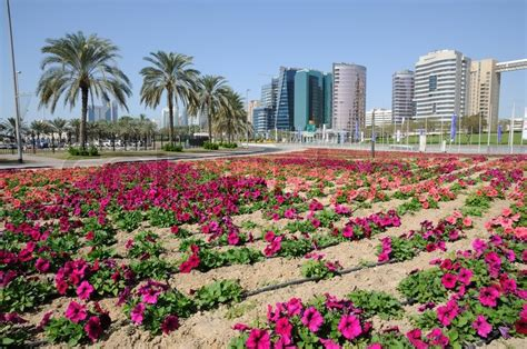 florist jobs in dubai flowers in dubai city united arab emirates stock photo