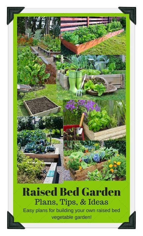 growing blueberries   garden vegetable garden