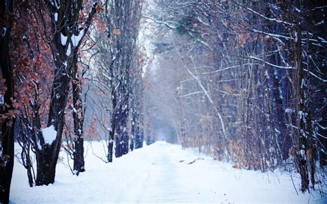 waking up in winter in search of what really matters at midlife books winter desktop backgrounds search