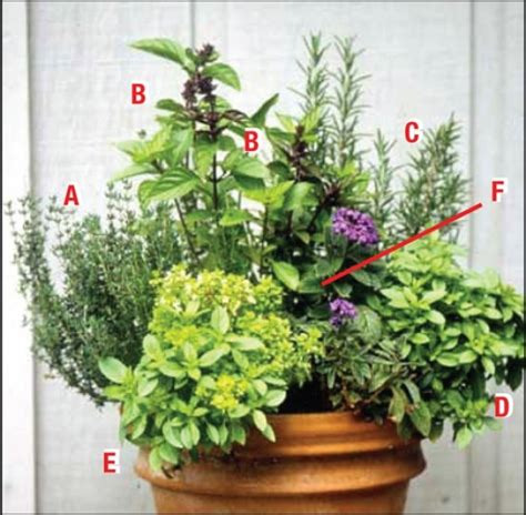 Inspiring Ideas Green Scene Plans Give Gardeners Guide Container Herb Garden Ideas