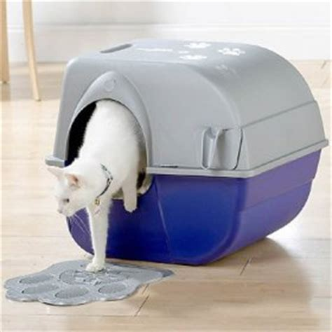 cat going to bathroom outside of litter box how to choose cat litter and a cat litter box