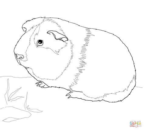 coloring page of a guinea pig cute guinea pig coloring online super coloring