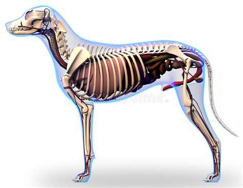 anatomia organi interni anatomia degli organi interni anatomia di un