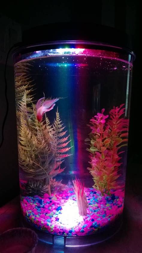 aquarium design betta 17 best images about aquariums on pinterest vw beetles