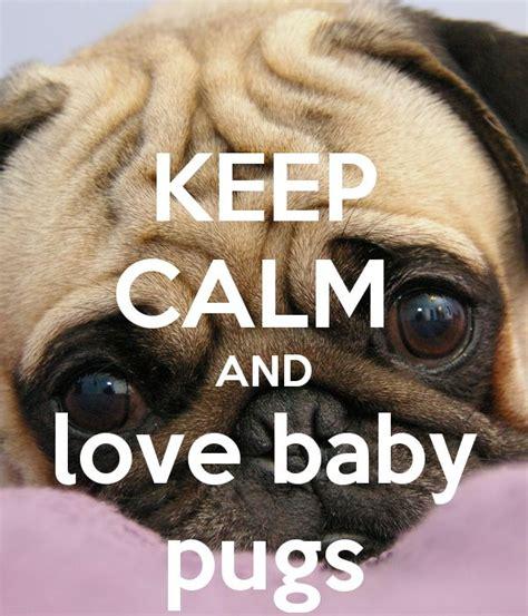 keeping pugs keep calm and baby pugs keep calm and carry on image generator daniela