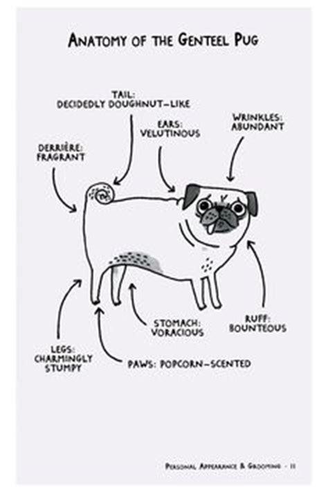pug etiquette pug on pugs pug and las vegas