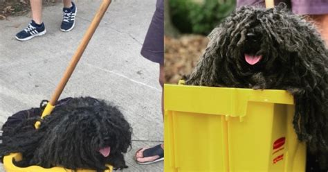 adorable dog posing   mop  hands    pet