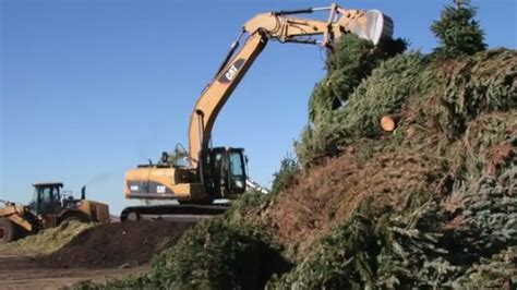 countywide christmas tree recycling program begins monday