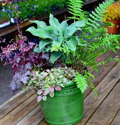 shade container garden painting the town perennial homestead gardens inc