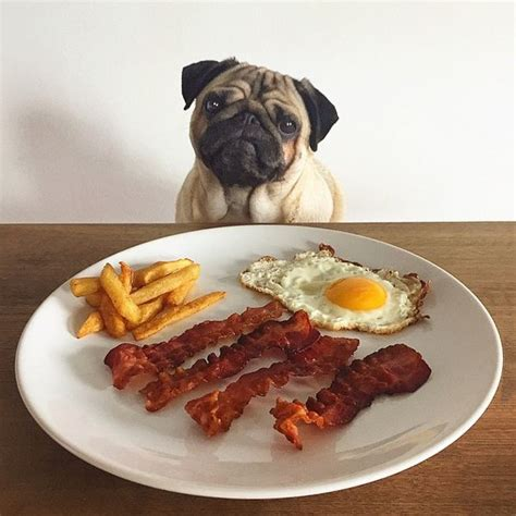 i m going to eat you pug 207 best images about loulou co on blinded by the light mondays and pug