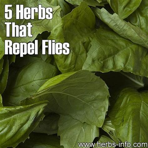herbs insects and repel flies on pinterest