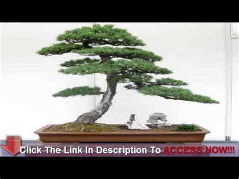 libro bonsai secrets designing growing japanese secrets to growing healthy bonsai trees youtube