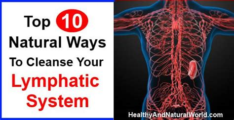 How To Detox Your Lymphatic System Naturally by Top 10 Ways To Cleanse Your Lymphatic System