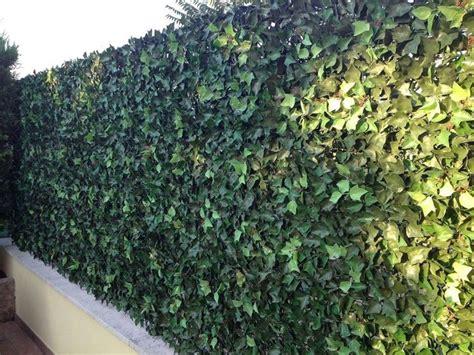 piante sempreverdi da terrazzo piante da appartamento sempreverdi piante appartamento
