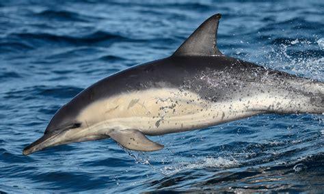 bagno con i delfini dove nuotare con i delfini in italia escursione nuotare