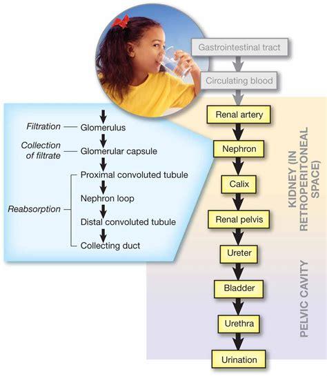 nursing career pathway