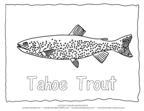 trout fish coloring page tahoe trout colouring pages 2 fish coloring sheet with