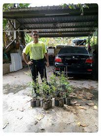 Benih Durian Udang Merah cita tani nursery ns015495 d benih durian udang merah