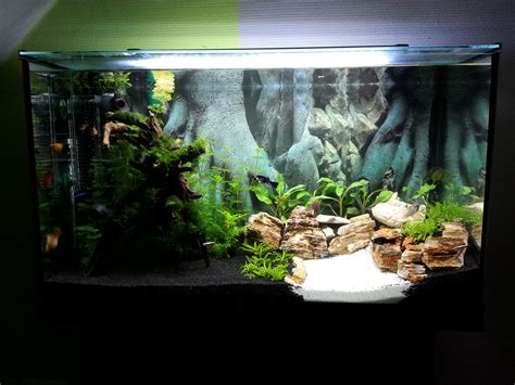 erstes aquascape aquarienvorstellung aquascaping forum