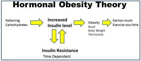 weight management theories sugar for obesity weight loss obesity relief