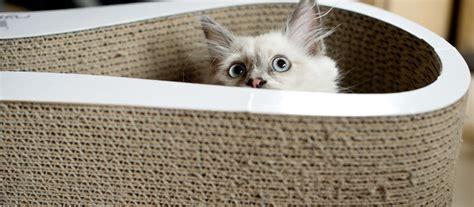 nieuwe kat in huis een nieuwe kat of kitten thuisbrengen perfect fit