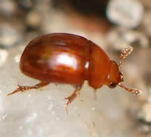 tiny reddish brown bugs in bathroom alpha tiny house alpha tiny house keva tiny house tiny houses for sale floor plans