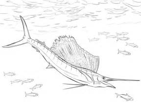 Walleye Pike Fish Coloring Pages Walleye Coloring Page