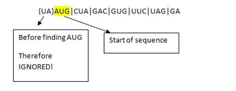 How To Search For On Amino How To Find Amino Acid Sequence