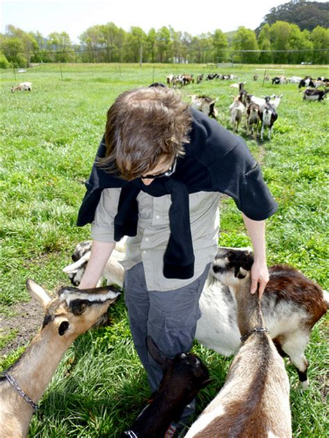 what is the largest breed what is the largest breed of goat home grown farming