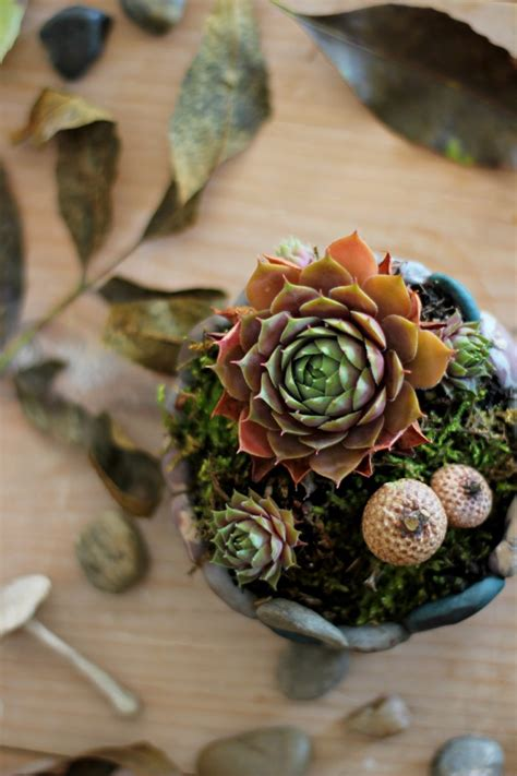 Rock Planters How To Make by 100 Creative Diy Craft Projects Ideas And Inspiration