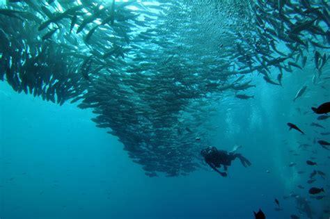 dive sipadan scuba diving sipadan malaysia best diving in malaysia