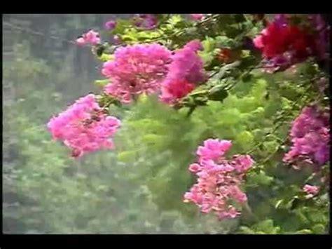 cadena de coros nohemi itzol cual ave triste nohemi itzol avi youtube