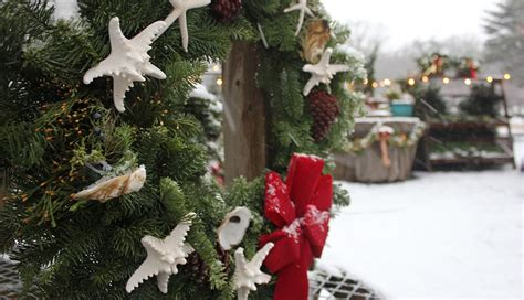 you cut christmas trees in the cape cod area on cape cod 5 events not to miss cape cod usa real estate