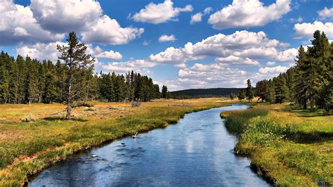 desktop wallpaper yellowstone park download wallpaper grizzly river yellowstone national