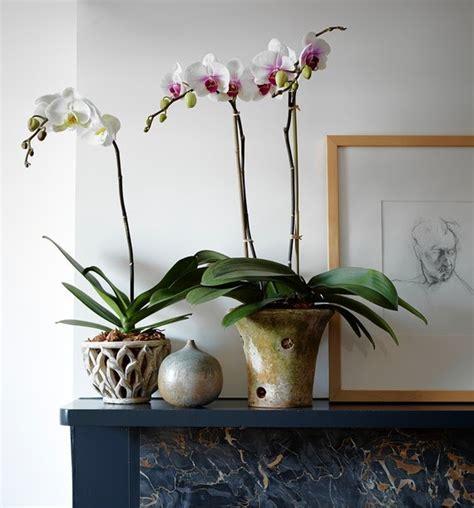 durham council  garden clubs   orchid pots