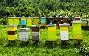 beehive colors how to build a better beehive modern farmer