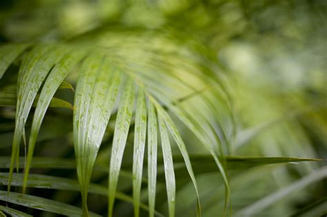 image of close up of tropical cane palm fronds freebie