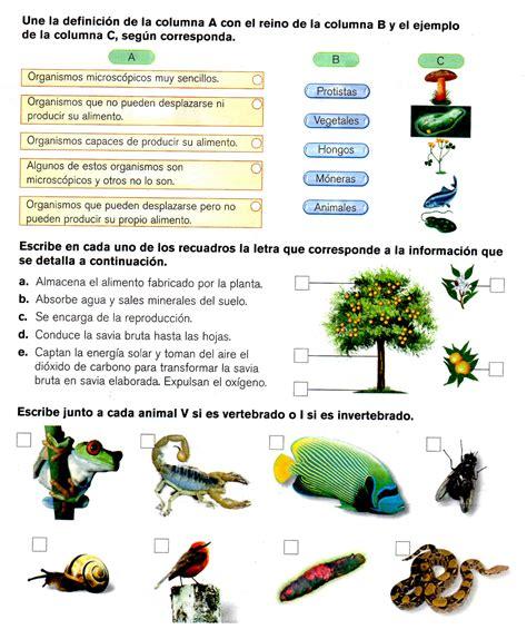 ciencias naturales grado octavo quinto grado diagnostico de ciencias naturales