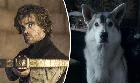 actor dog game of thrones game of thrones star peter dinklage urges fans to not buy