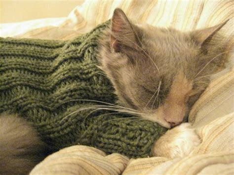 knit a cat sweater sweater for a toasty cat knitting